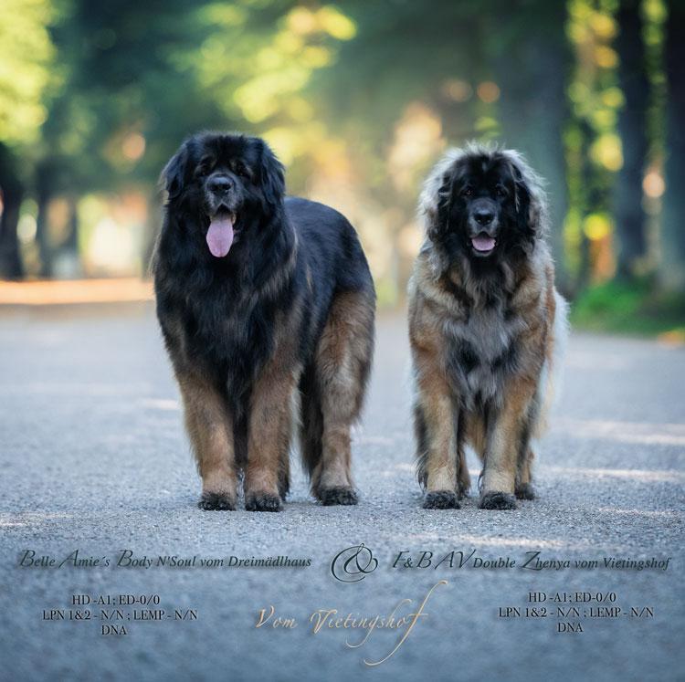 Buddy & Zhenya